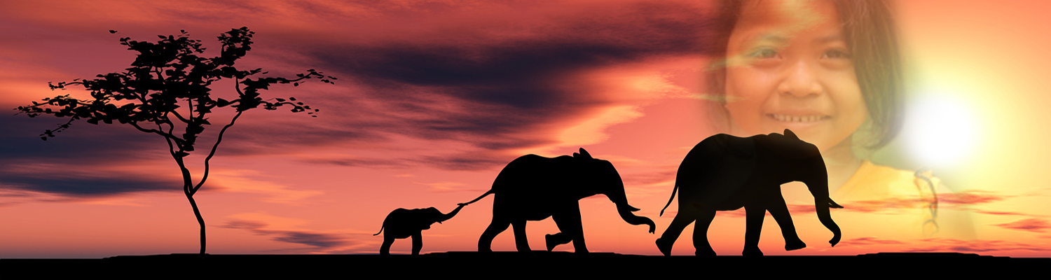 Elephant family walking tail to tail against an orange sunset. © Vadim Rybakov | Dreamstime.com