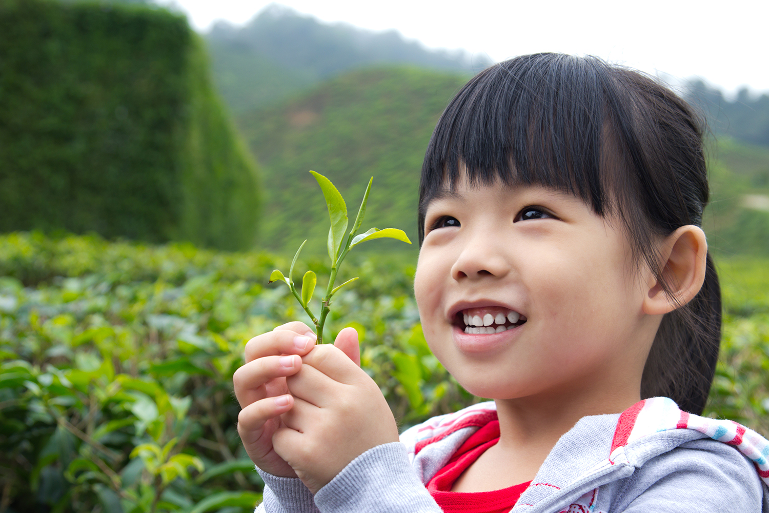 Happy Asian girl holding a green tea leaf in her hands.